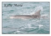 Adopt a Dolphin - Katie Marie