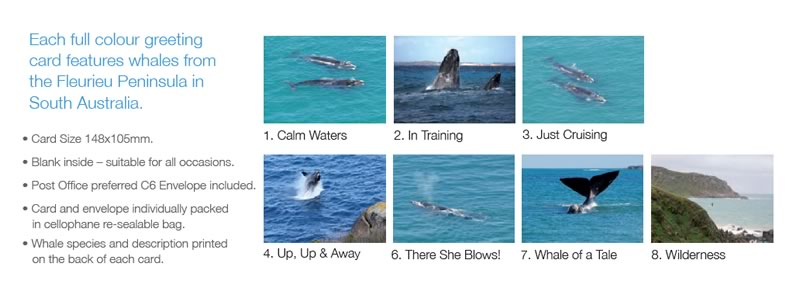 Whale Greeting Cards